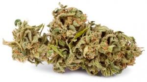 hi-marijuana-bud
