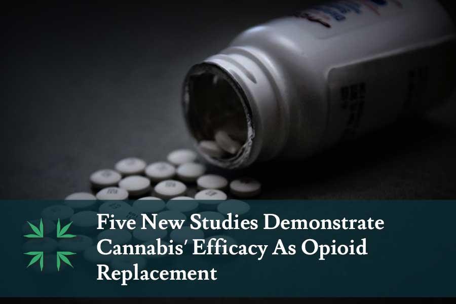 marijuana opioid replacement