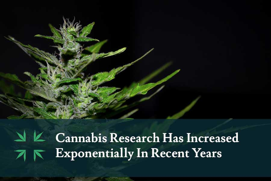 Marijuana Research Increasing